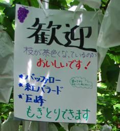 平山4.JPG